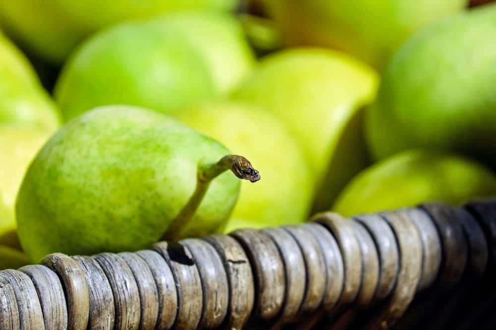 pears-1715766_1280