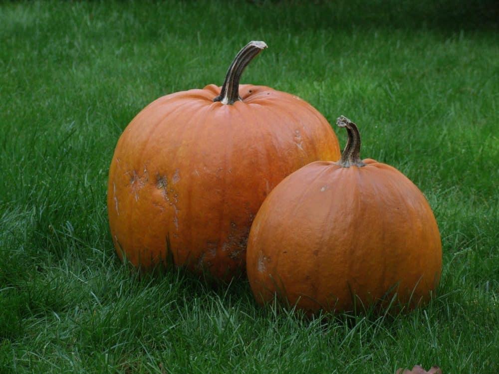 pumpkin-1107527_1280