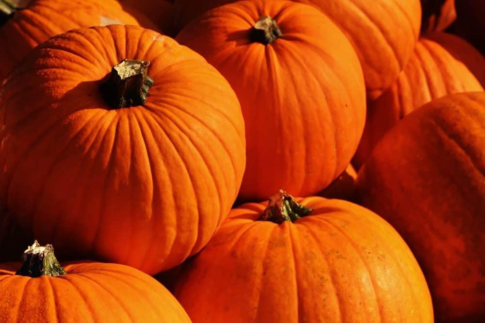 pumpkins-1659946_1280