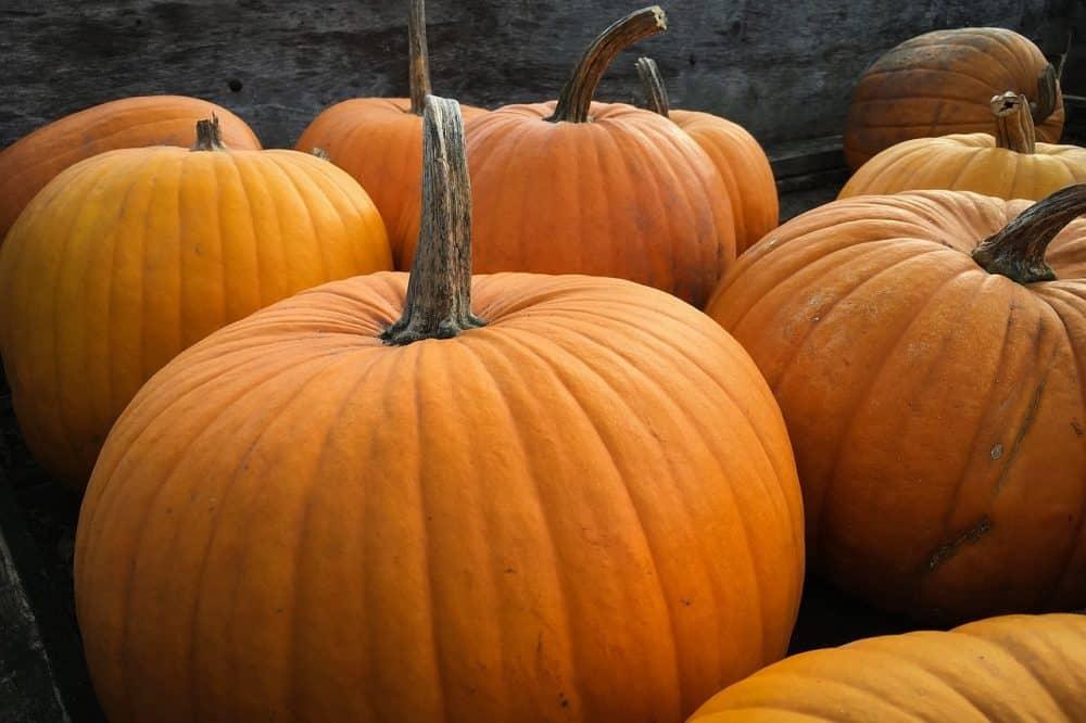 pumpkins-984207_1280