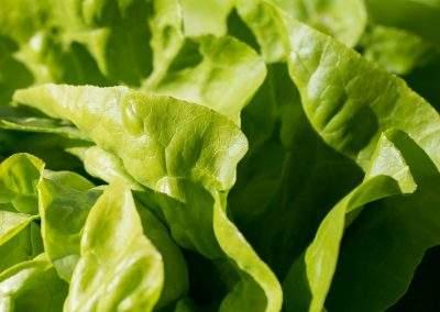 Sonkás saláta
