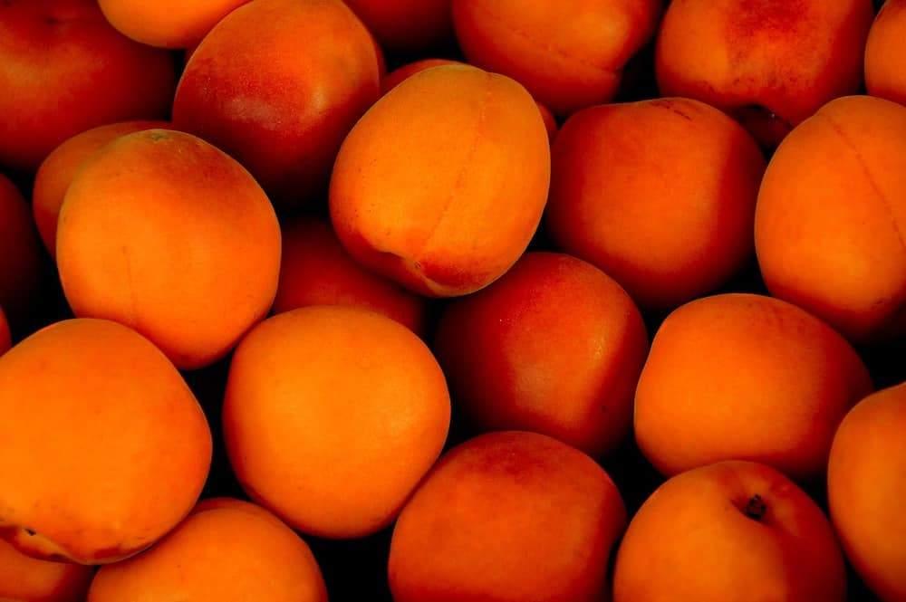 apricot-1556851_1920